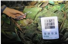 Nghiên cứu đề xuất các giải pháp bảo tồn loài Thạch sùng mí Cát Bà tại Vườn Quốc gia Cát Bà
